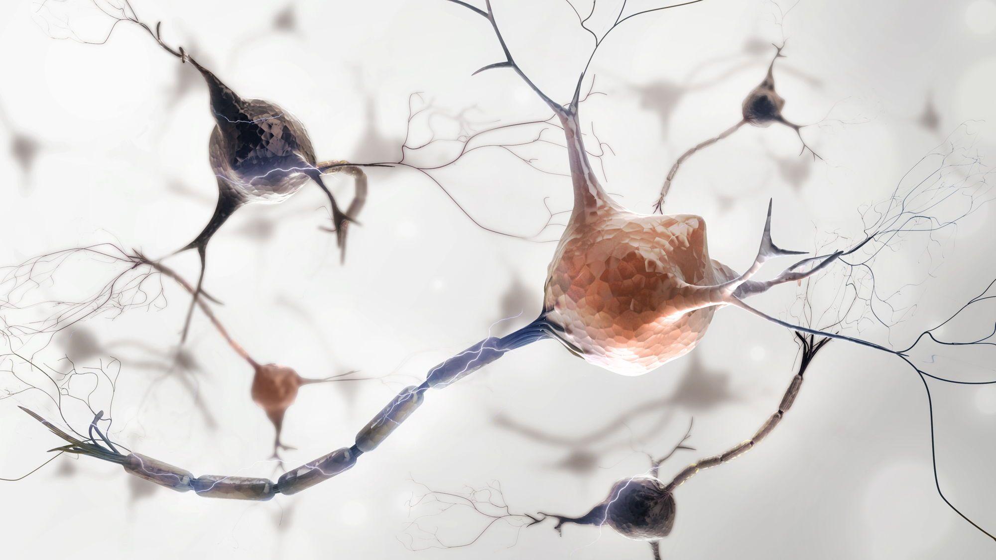 Gehirnzellen Regenerieren